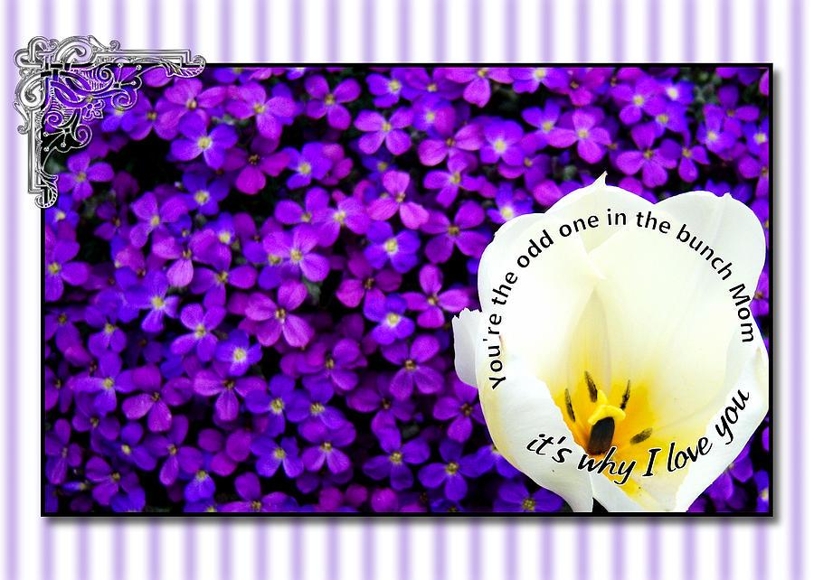 Greeting Card Digital Art - Moms Day Humor Card by Susan Kinney