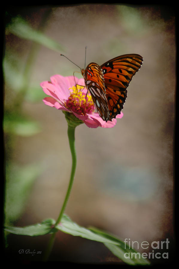 Monarch Beauty by DONNA BENTLEY