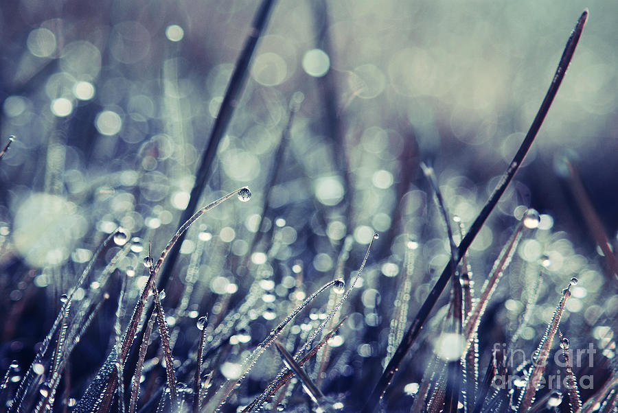Grass Photograph - Mondo 02 - S03b by Variance Collections