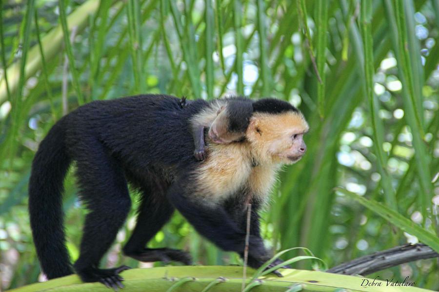 Monkey On My Back Photograph - Monkey On My Back by Debra     Vatalaro