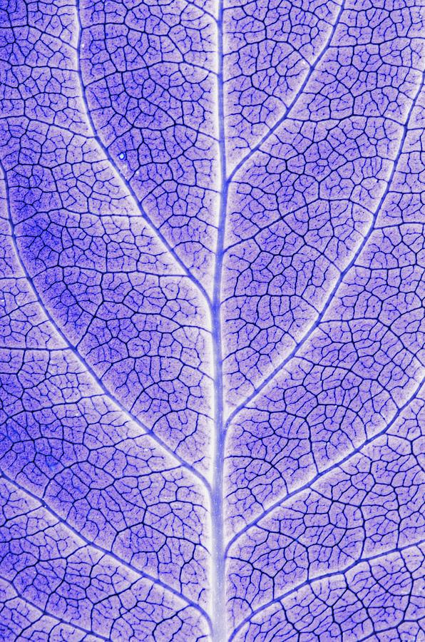 Abstracts Photograph - Monotone Close Up Of Leaf by Sean White