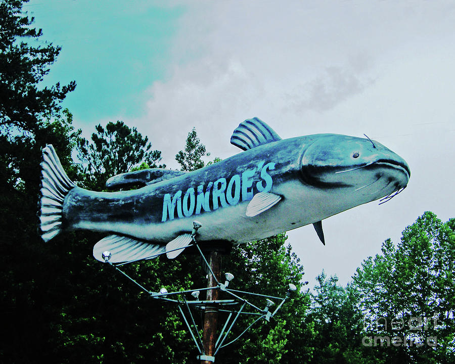 Monroe's Catfish Photograph - Monroes Catfish  by Lizi Beard-Ward