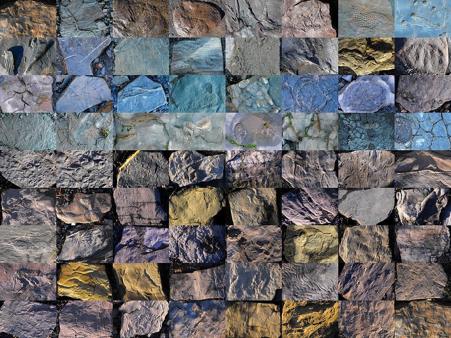 Blue Beach Photograph - Montage Blue Beach Fossil Specimens by William OBrien