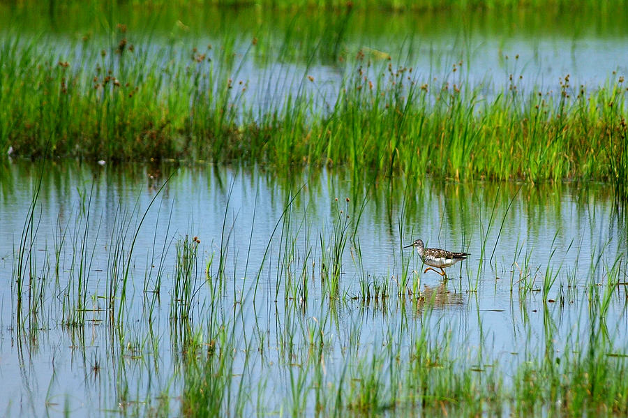 Bird Photograph - Montezuma National Wildlife Refuge by Paul Ge
