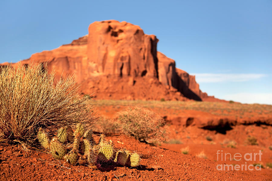 America Photograph - Monument Valley Cactus by Jane Rix