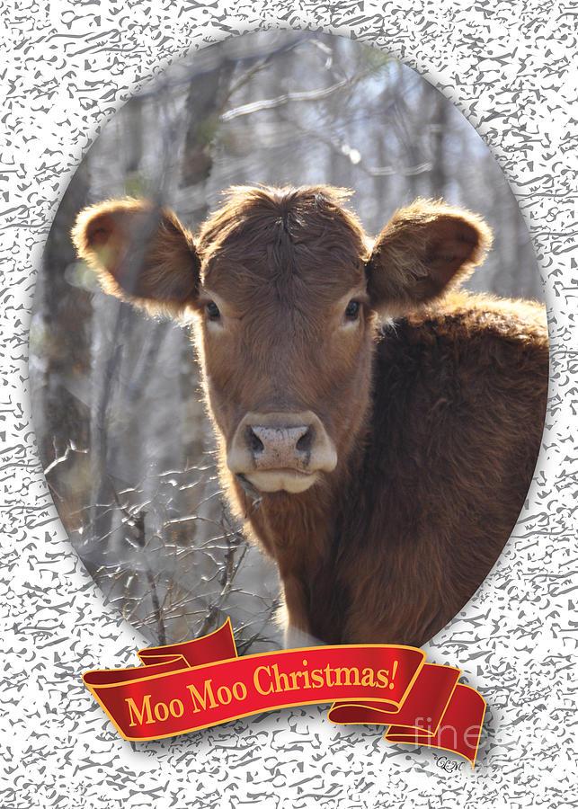 Christmas Card Photograph - Moo Moo Christmas by Cheryl McClure