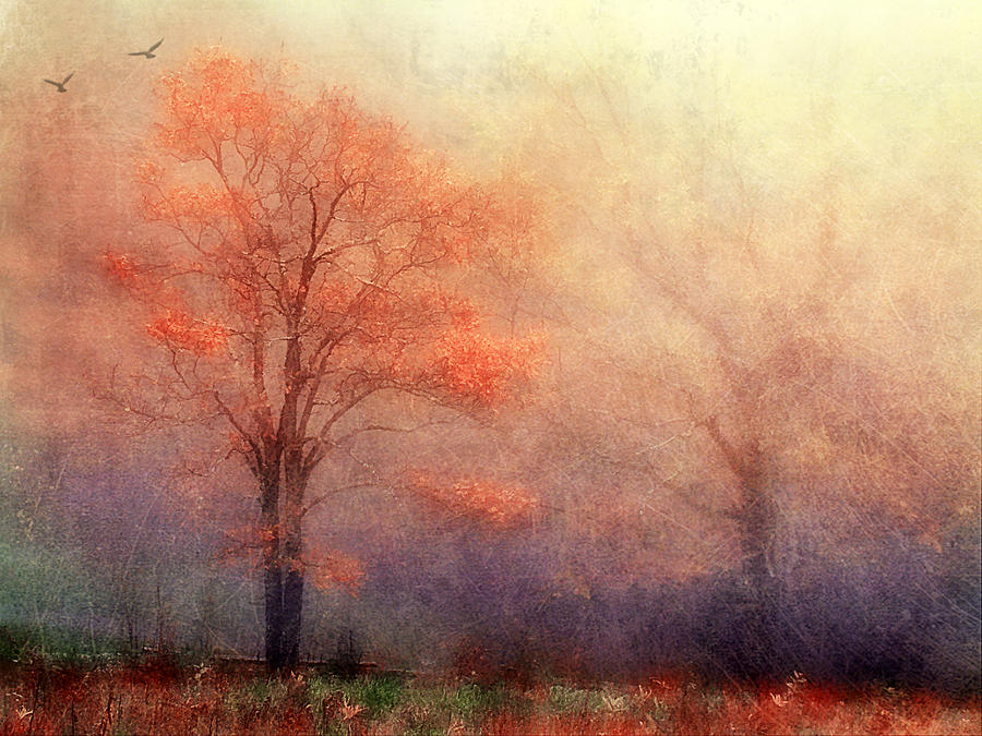 Autumn Photograph - Moods Of Autumn by Darren Fisher