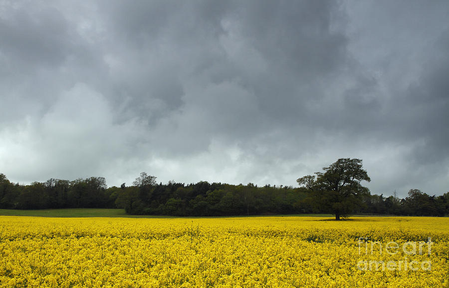 Bio Photograph - Moody Rapeseed Field by Urban Shooters