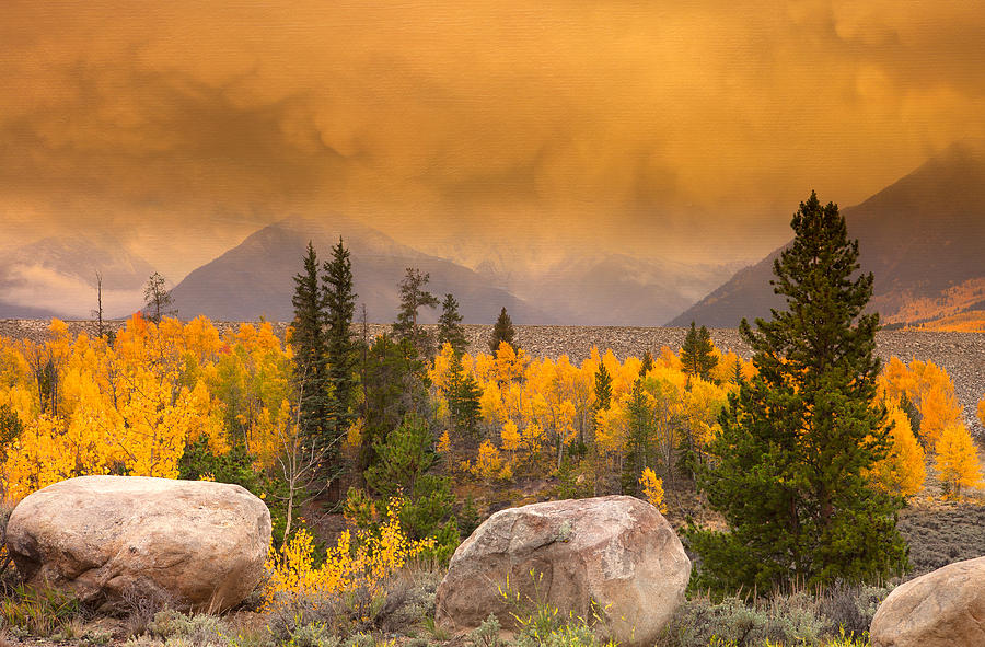 Fall Colors Photograph - Moody by Tim Reaves