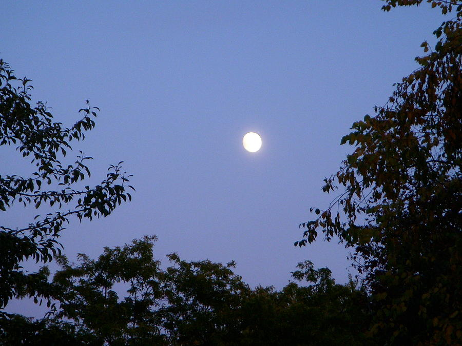 Moon Photograph - Moon by Aimee L Maher Photography and Art Visit ALMGallerydotcom