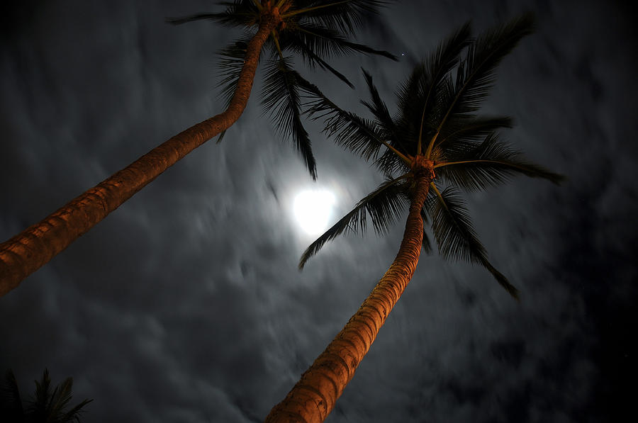 Moon Photograph - Moon And Palms by George Crawford