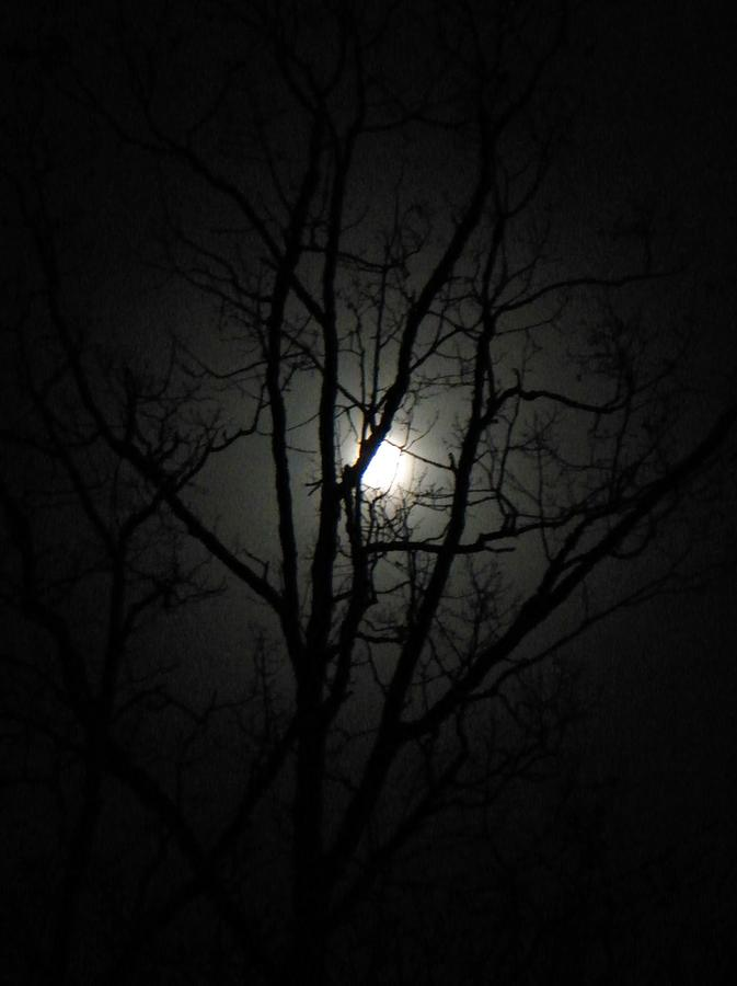 Moon Branches Photograph by Jennifer Compton