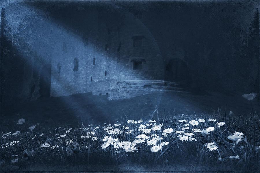 Artistic Digital Art - Moon Light Daisies by Svetlana Sewell
