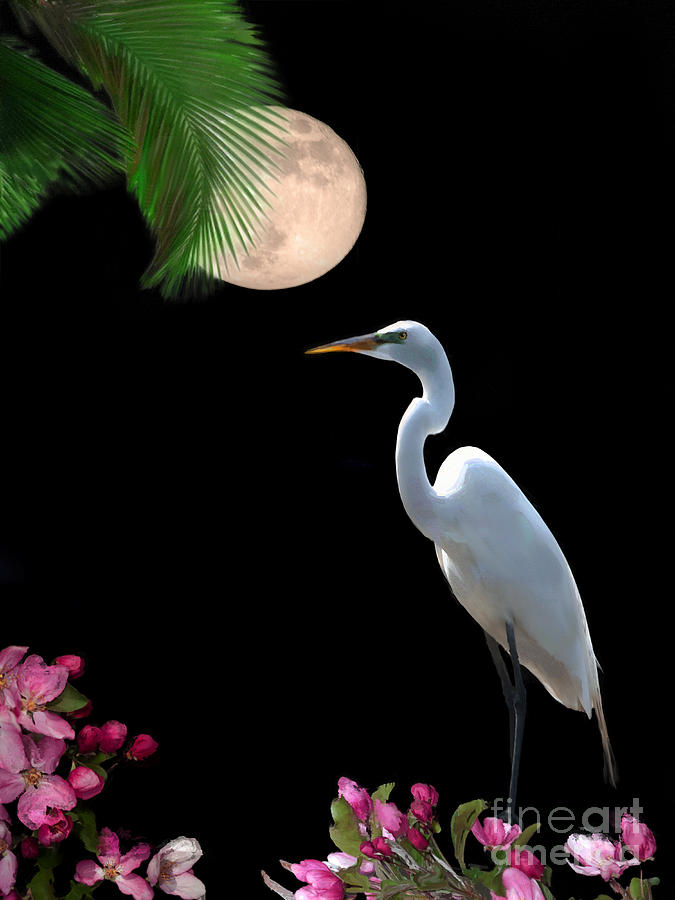Great Egret Photograph - Moon Over Florida by Betty LaRue