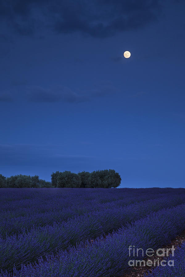 Dark Photograph - Moon Over Lavender by Brian Jannsen