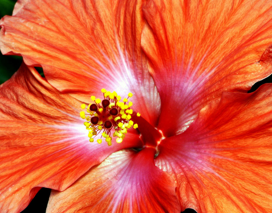 Orange Flower Photograph - Moonglow..... by Tanya Tanski