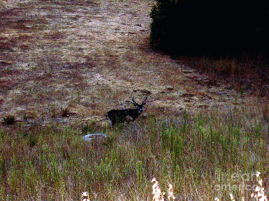 Post Card Photograph - Moonlit Buck by The Kepharts