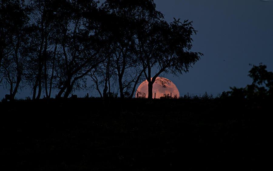 Moon Photograph - Moonscape by Betsy Knapp
