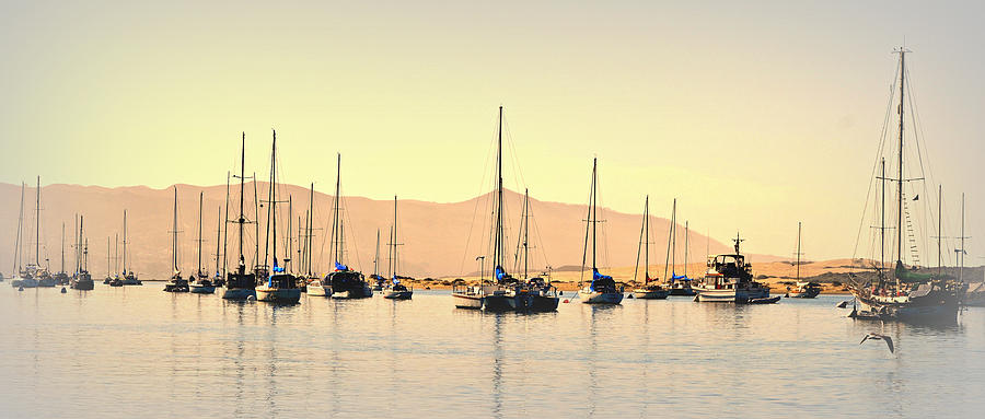 Boats In Harbor Photograph - Moorings by Fraida Gutovich