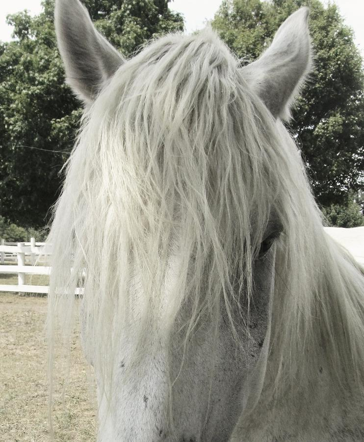 Horse Photograph - Mop Top by Todd Sherlock