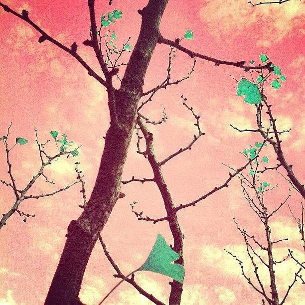 Pink Photograph - More Fun by Courtney Haile