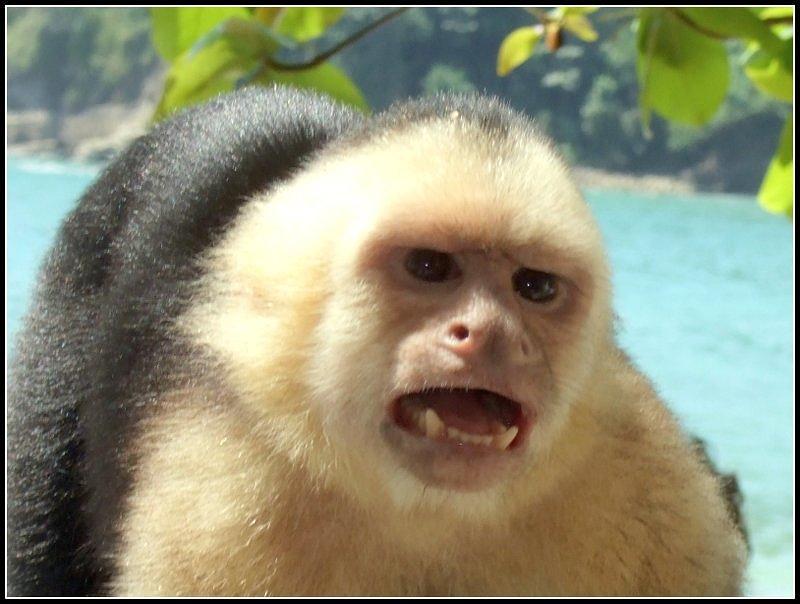Monkey Photograph - Mornin Sweetheart by Satya Winkelman