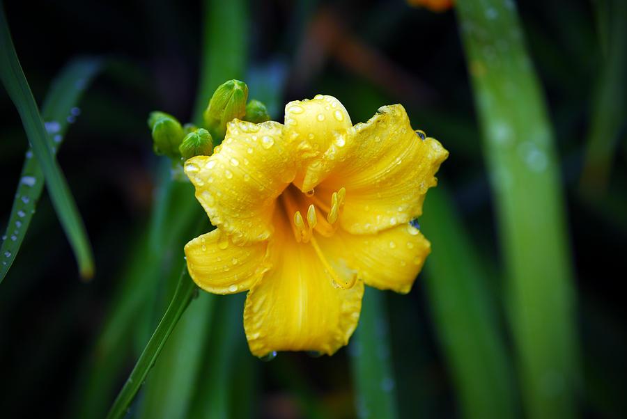 Rain Drops Photograph - Morning Beauty by Mary Timman