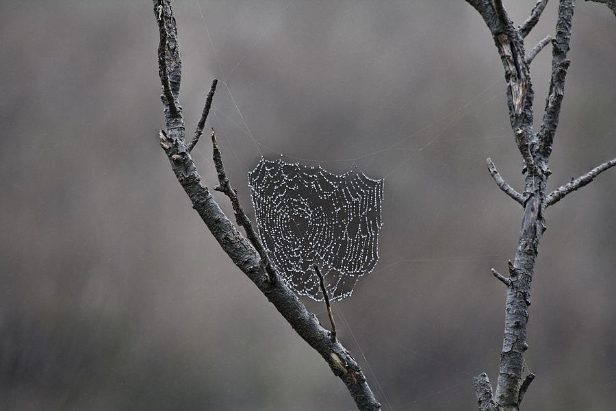 Morning Dew Photograph - Morning Dew by Douglas Barnard