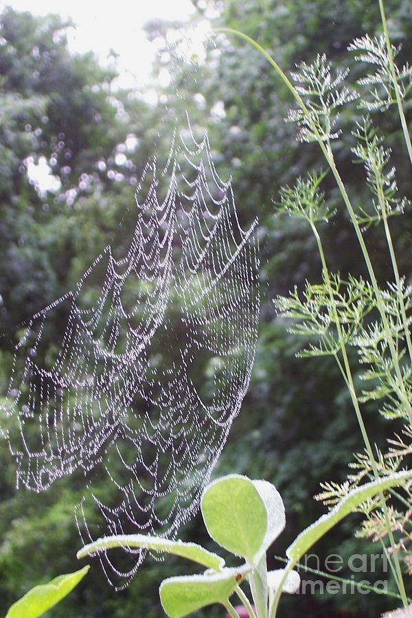 Green Garden Photograph - Morning Dew by Michelle Welles