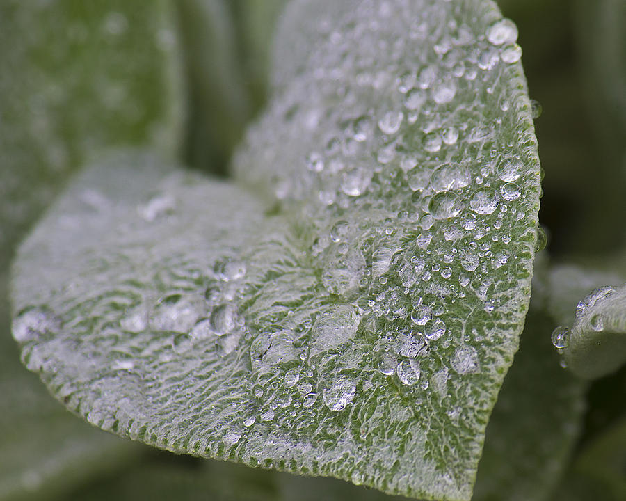 Green Photograph - Morning Dew by Tammye Nash
