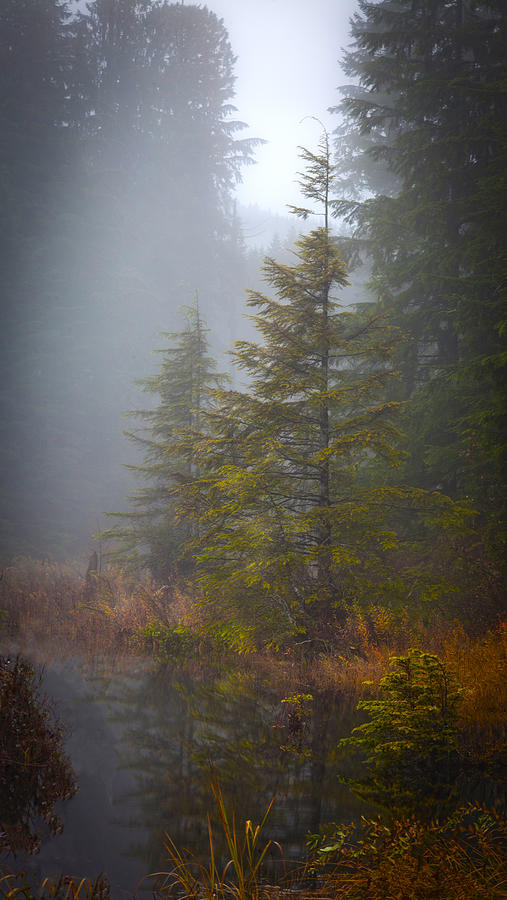 Fall Photograph - Morning Fall Colors by Mike Reid