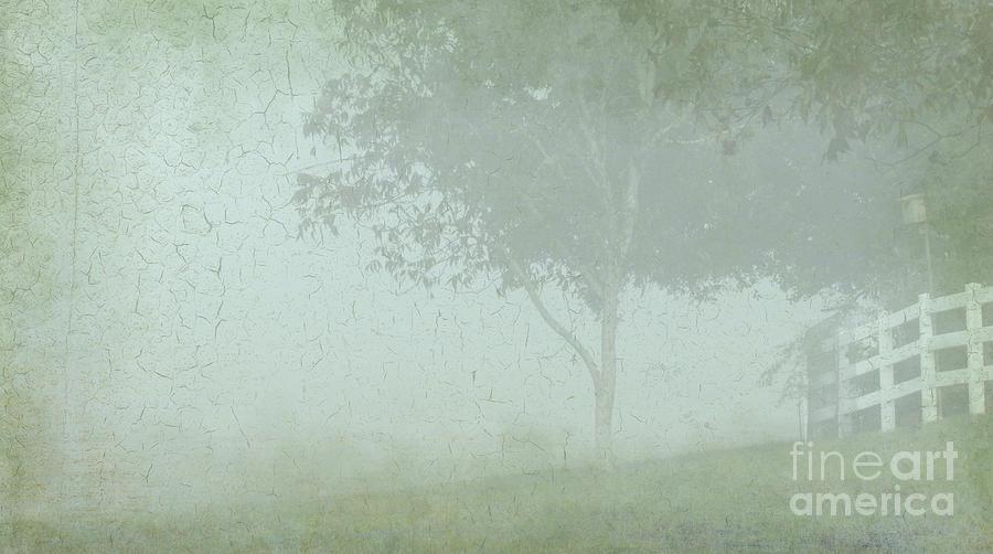 Fog Photograph - Morning Fog by Judi Bagwell