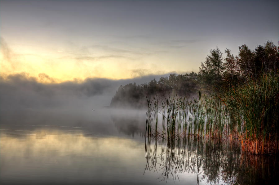 Loon Photograph - Morning Fog With A Loon by Gary Smith
