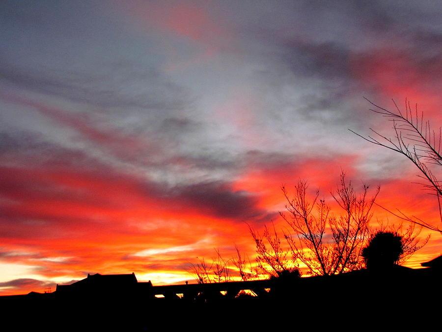 Morning Glory Photograph - Morning Glory by Joyce Woodhouse