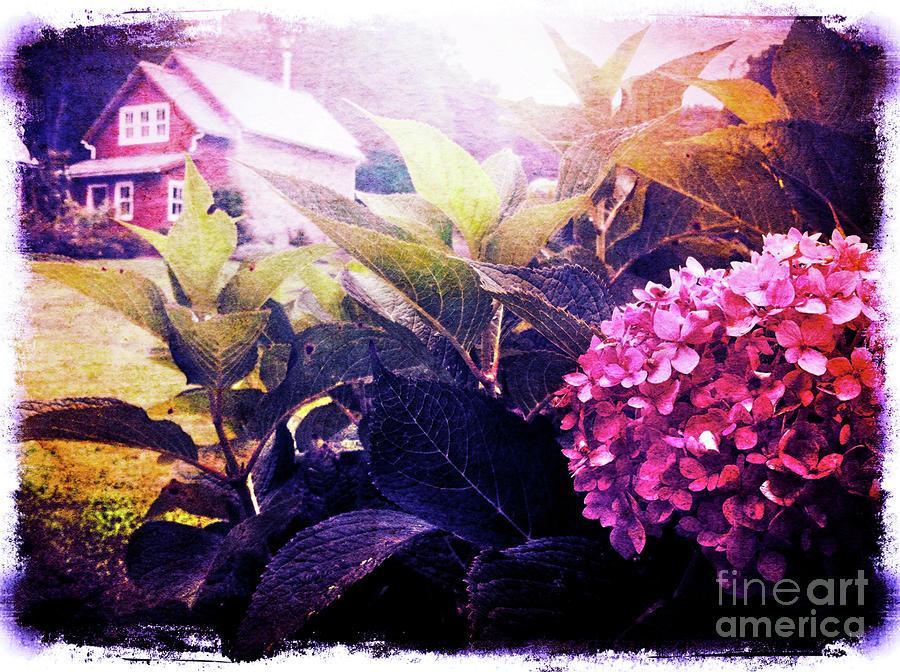 Garden Digital Art - Morning Glory by Kevyn Bashore
