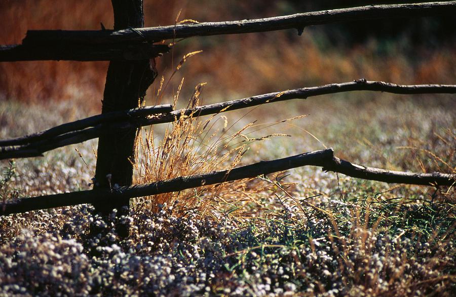 Grassland Photograph - Morning Grass by Carlos Diaz