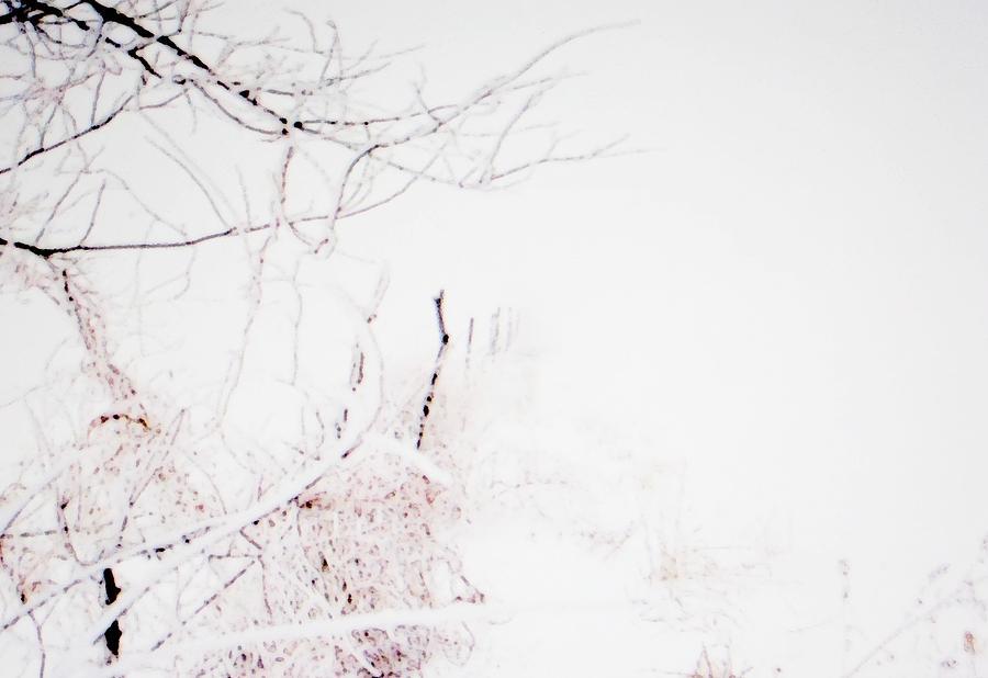 Fog Photograph - Morning In Winter by Jennifer Choate