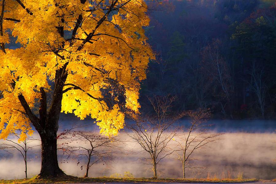 Dappled Light Photograph - Morning Maple Ll by Rob Travis