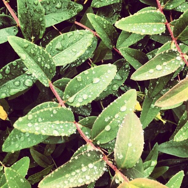 Salford Photograph - #morning #raindrops #rainy #random by Abdelrahman Alawwad