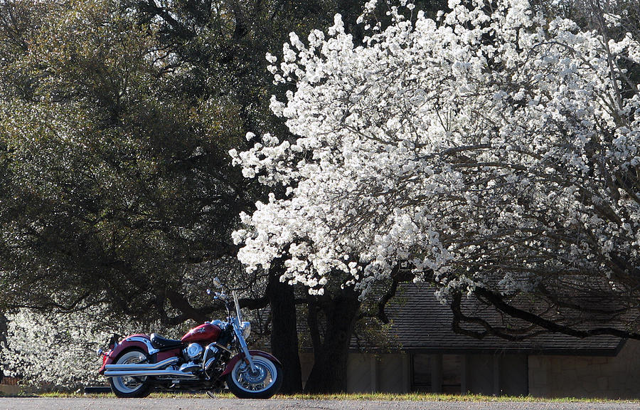 Motorcycle Photograph - Morning Ride by Janet Oh