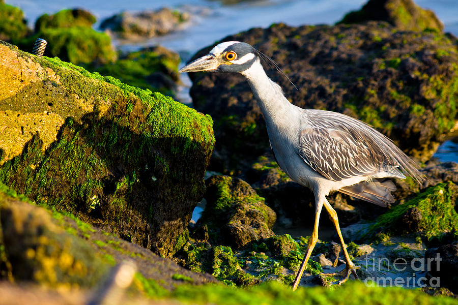 Bird Photograph - Morning Stroll by John Stanisich