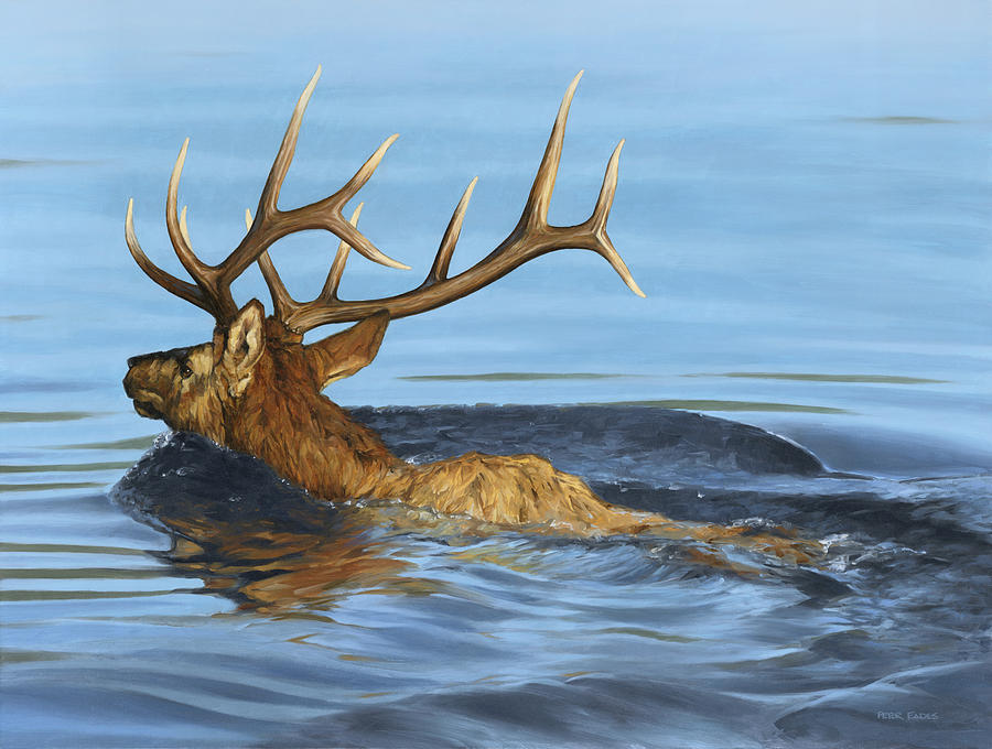 Morning Swim by Peter Eades