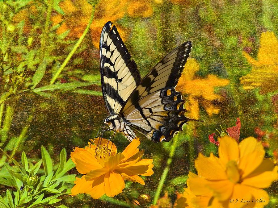 J Larry Walker Digital Art - Morning Tiger Swallowtail by J Larry Walker
