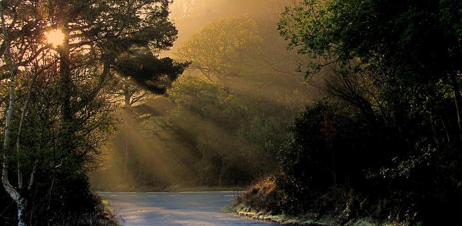 Sunrays.trees.killarney Photograph - Morning Walk by Barbara Walsh