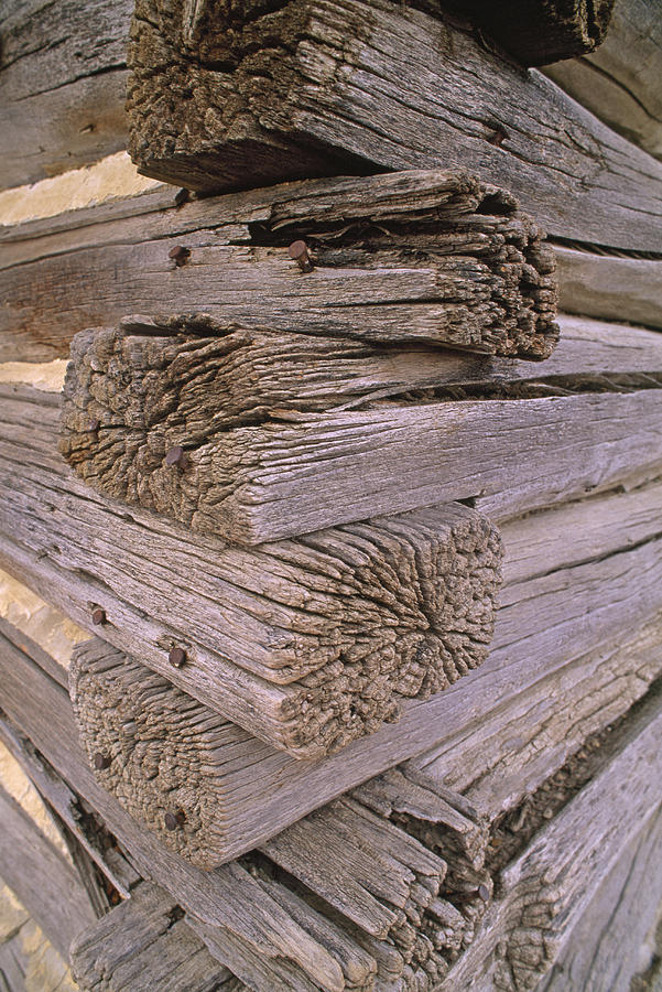 Color Image Photograph - Morticed Joints On An Abandonded Log by Gordon Wiltsie