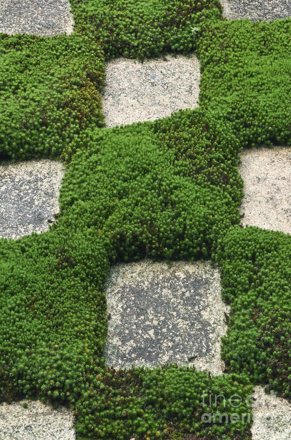 Abstract Photograph - Moss And Stepping Stones by Rob Tilley