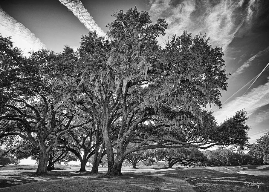 Beaufort County Photograph - Moss-draped Live Oaks by Phill Doherty