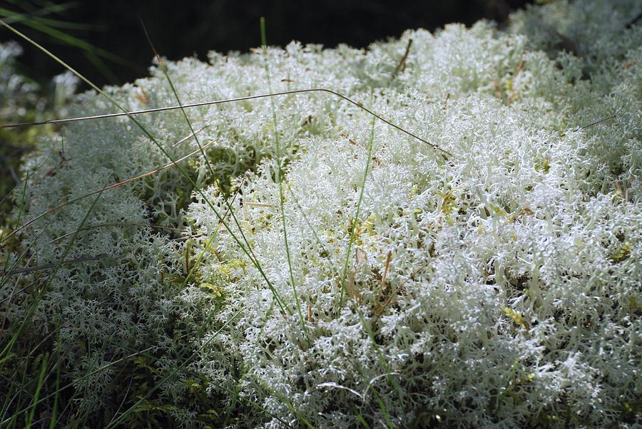 Moss Photograph