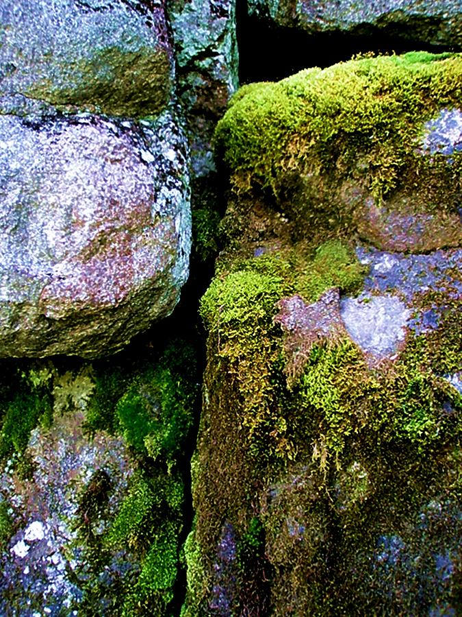 Nature Photograph - Moss On Rocks by Bridget Johnson