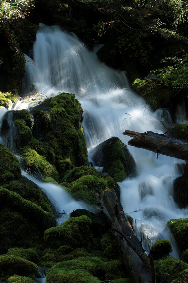 Mossy Photograph - Mossy Cascades by Harry Snowden